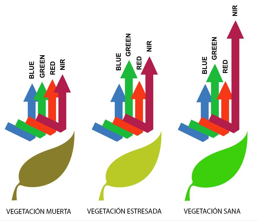 grafico ndvi2